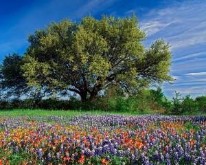 מדיטציית טבע החיים