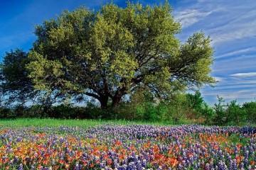 מדיטצייה בדמיון מודרך  – מדיטציית טבע החיים